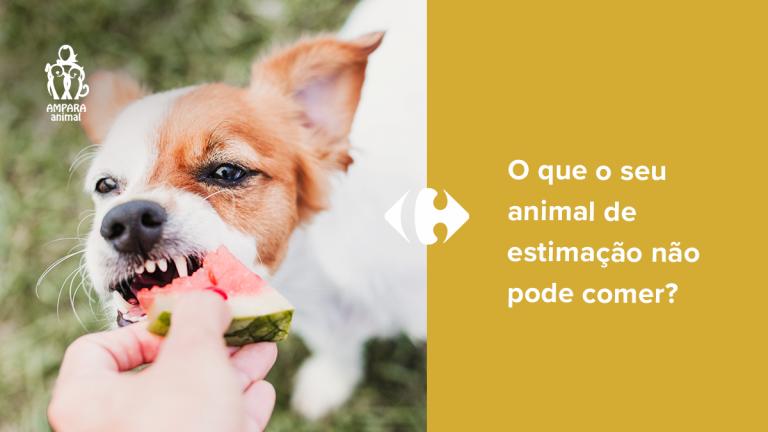 cachorro comendo melancia da mão de seu dono