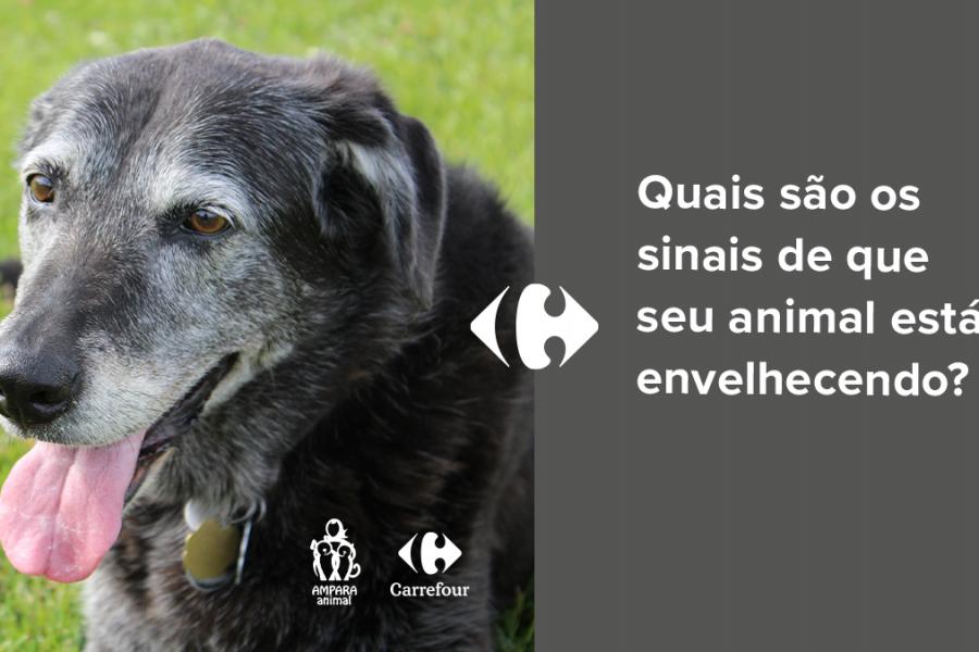 cachorro velho com a língua para fora sentado em um gramado