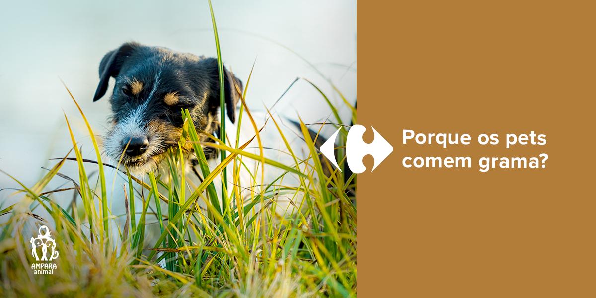cachorro comendo grama de um jardim