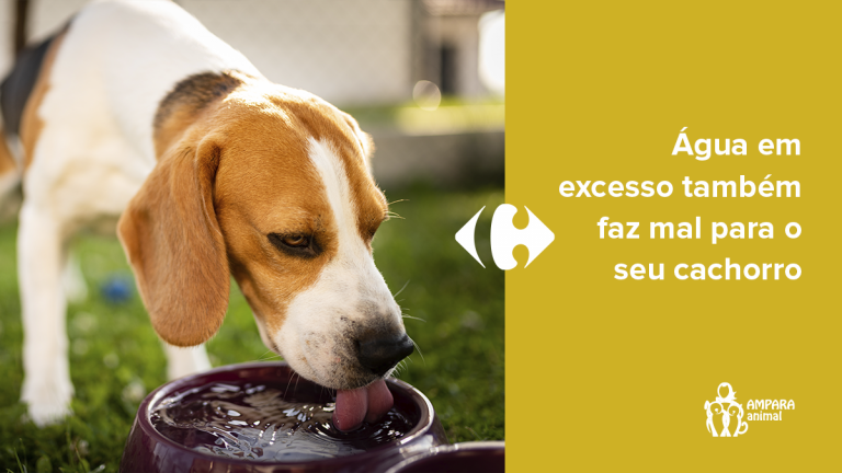 cachorro tomando água no jardim