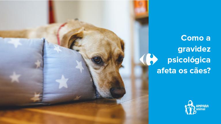 cachorro triste deitado em sua cama em casa